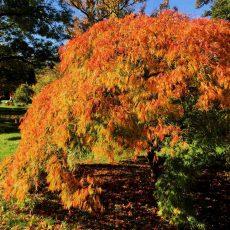 Bunter Herbstgarten